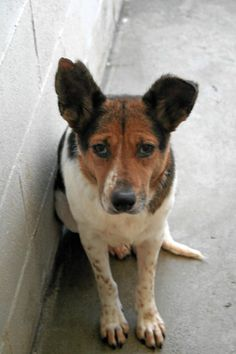 Lovables: Eve is an adult Cattle Dog mix who had been through a lot before she came to EGAPL! When Eve was rescued from the streets, she was an extremely fearful girl taking care of her newborn puppies on her own. Now Eve's puppies are ready for their forever... East Greenwich Animal Protection League East Greenwich, RI www.pawsforthenews.tv