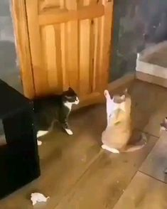 The cat's using force Cute Funny Animals, Cute Baby Animals, Funny Dogs, Cute Cats, Silly Cats, Funny Memes, Cute Animal Videos, Funny Animal Pictures, I Love Cats
