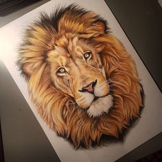 Lion Images, Lion Pictures, Pictures To Draw, Animal Paintings, Animal Drawings, Lion Sketch, Lion Head Tattoos, Lion Drawing, Lion Tattoo Design