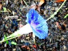 suspiro azul