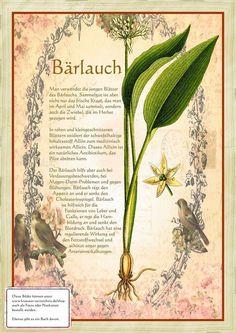 Bärlauch www.kraeuter-verz...