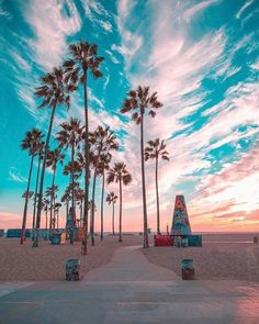 How to take amazing summer travel photos – by the experts - For this photo, the colours of the famous graffiti palm trees in Venice Beach compliment the colour - Aesthetic Backgrounds, Aesthetic Wallpapers, Summer Wallpaper, Tree Wallpaper, Beach Aesthetic, California Dreamin', Venice Beach California, California Palm Trees, California Camping