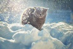 nella neve e nella luce