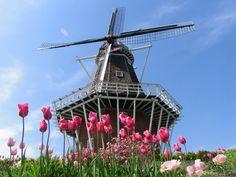 Dutch Windmills Tulips | Holland windmill_1455