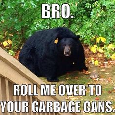 Funny pictures about Obese Black Bear. Oh, and cool pics about Obese Black Bear. Also, Obese Black Bear photos. Funny Animal Pictures, Funny Images, Funny Animals, Animal Pics, Adorable Animals, Meme Pictures, Fat Animals, Bear Meme, Funny Bears