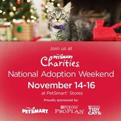 Come on out and meet us at the National Adoption Weekend, Petsmart New Braunfels.