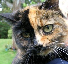 whiskers - Tortie - I love Tortie kitties!