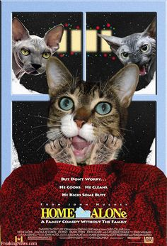 Cat Movies Pictures - Strange Pics - Freaking News