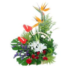 Jauntily  6 red roses, 1 white lilies, 2 anthuriums, 2 branches of bird of paradise, purple forget-me-not, match greenary, arrange in a elegant basket.