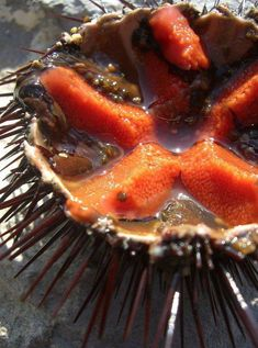 Ricci di mare – sea urchins, served seasonally in Puglia and Sicily also known as a sea urchin