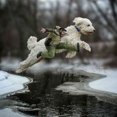 Photographer Christopher Cline and his Goldendoodle Juji (pronounced Joo-ji) are a match made in Photoshop heaven. After moving from Virginia to Minnesota a few years ago, the artist was feeling ho…