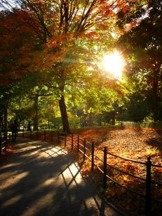 Autumn foliage. Central Park, New York City