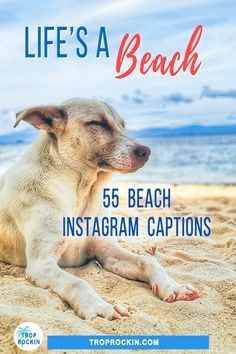 Looking for the best beach captions for Instagram? Try these 55 beach captions for your day at the beach or snaps from your beach vacation. We've got: Beach quotes about Life and Beach Quotes about Happiness. Plus, Funny beach captions | Cute beach captions for instagram | Couple beach captions for instagram | Short beach captions for instagram | Clever beach captions for instagram | beach captions with friends.