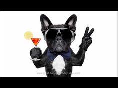 Happy Birthday!!! - Funny Birthday Songs (Cute Puppy Edition) - YouTube
