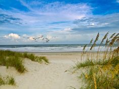 Huntington Beach State Park, South Carolina just a short distance from Myrtle Beach on Highway 17...absolutely beautiful