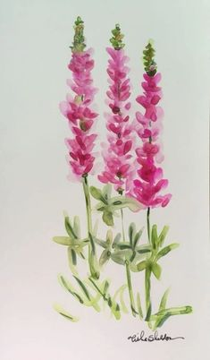 Maine Lupine on Yupo Paper. Watercolor by Tisha Sheldon - Maine Lupine on Yupo Paper. Watercolor by Tisha Sheldon Watercolor Cards, Watercolour Painting, Floral Watercolor, Watercolors, Watercolor Pencils, Watercolor Design, Watercolor Trees, Easy Watercolor, Watercolor Artists