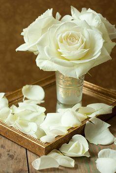 white roses | Flickr