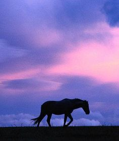 Lone horse walking against the windy sky.