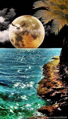 romantic and charming nature photographs! Beautiful Moon Images, Beautiful Gif, Beautiful Landscapes, Beautiful Pictures, Moon Photos, Moon Pictures, Nature Pictures, Gif Bonito, Good Night Gif