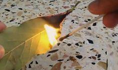 Faites brûler des feuilles de laurier à la maison et regardez ce qui se passe de fabuleux!