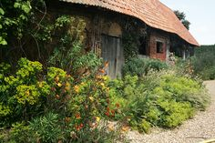 An orange Oenothera combined with the yellow Euphorbia and Alchemilla in Le Jardin Plume (France)