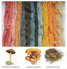 Natural dying with mushrooms  http://mushroom-collecting.com/mushroomdyeing.html