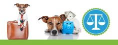 Splash and Dash for Dogs Pet Grooming and Boutique Franchise Available to Open in 2015