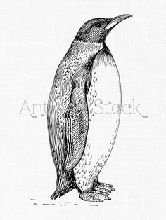 Penguin Line Drawing - Digital Printable Sheet - Iron on Transfer, Scrapbook, Design... by Antique Stock
