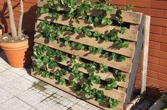strawberry garden | ... garden in vertical garden vegetables with strawberry pallet balcony