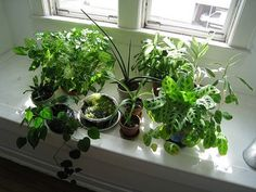 Can Window Tinting Affect Your Indoor Plants? | homerous