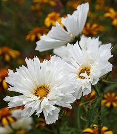 un giardino in diretta - blog di giardini, giardinaggio, natura e di artigianato: primavera