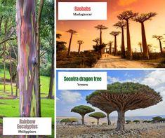 Travel News, New Travel, Travel Pictures, Travel Photos, Socotra, Vacation Deals, World Traveler, Travel Destinations, Tourism