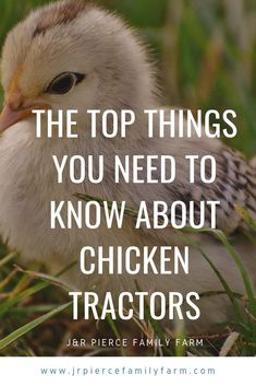 Why You Should Be Raising Your Chickens in a Chicken Tractor - J&R Pierce Family Farm Diy Chicken Coop Plans, Best Chicken Coop, Backyard Chicken Coops, Chicken Runs, Raising Backyard Chickens, Keeping Chickens, Meat Chickens, Shade Perennials, Shade Plants