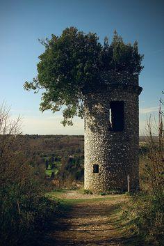 mythopoetical:    Tree in tower by fbako on Flickr.