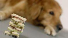 Immer mal wiederhabe ich Lust, ein paar Hundekekse für Moe zu backen. Ichmag mich dafür nichtEwigkeiten in der Küche aufhalten, außerdem sollen die Zutaten nicht allzu teuer sein falls mal etwas daneben geht.Das Wichtigste ist aber: Moe soll es schmecken! Auf der Suche nach neuen Rezepten bin ich auf die folgenden 10 + 2 Hundekekse – Rezepte gestoßen, die ich …