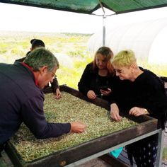 Interactive activity at the West Coast Fossil Park, not far from Saldanha Interactive Activities, Under Construction, West Coast, Touring, Wild Flowers, Fossil, South Africa, Teeth, Scenery