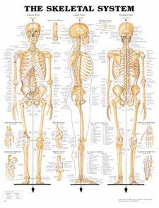 Bones Bones Bone
