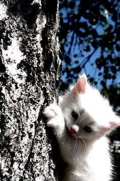 """""""I like cats because they go where they want, do what they want, and, usually, get what they want."""" --Rick McDivitt"""