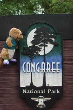 Congaree National Park is home to old growth bottomland hardwood forests. #congaree