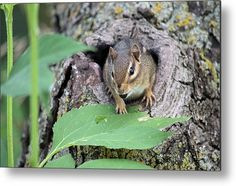 A #Hole In #One Metal Print By Bonfire #Photography