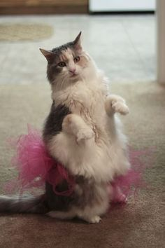35 Animals Who Just Want To Dance | Blaze Press