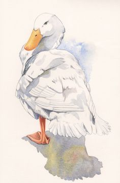 Duck Painting nature wildlife art bird white by Splodgepodge