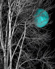 black white teal moon tree bedroom teal home decor wall art