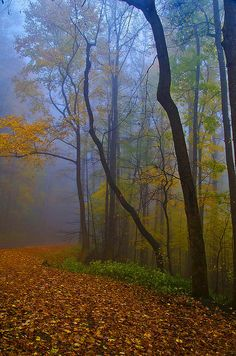 Top Ten Things to see in the Great Smoky Mountains National Park