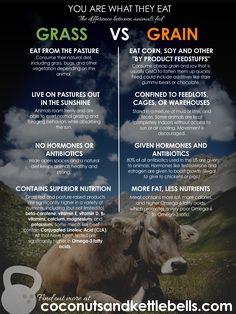 Grass-Fed Difference: Why You Are What They Eat You Are What They Eat. Why grass fed is worth your time and Money.You Are What They Eat. Why grass fed is worth your time and Money. Health And Nutrition, Health And Wellness, Health Tips, Nutrition Plans, Health Articles, Health Fitness, Clean Recipes, Real Food Recipes, Clean Foods