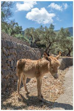 Wandern auf Mallorca - Wanderung vom Landgut Son Marroig nach Sa Foradada 180gradsalon