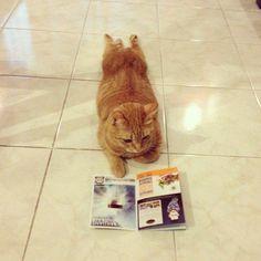【一緒に連れてって】飼い主が旅行に行くと察知した瞬間のネコ(8枚+1) | COROBUZZ