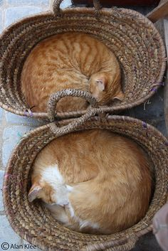 Two Baskets of Love
