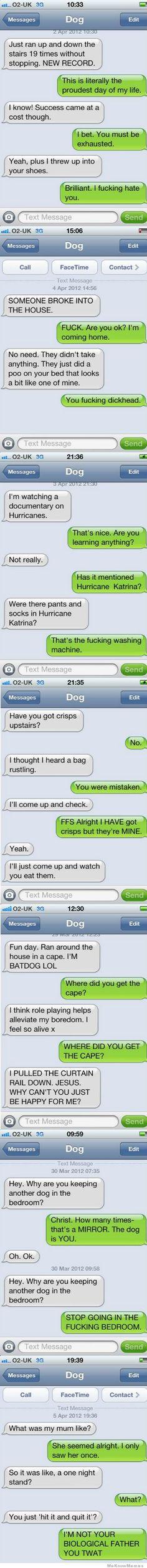 dog texts - hilarious!