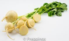 Golden Turnip / Yellow Turnip :: Search by flavors, find similar varieties and discover new uses for ingredients @ preppings.com